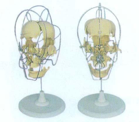 成人分离头颅骨模型产品介绍:结构特点:可分解16部件 材质:进口pvc