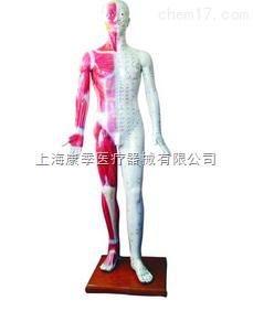 人体针灸模型178cm