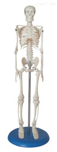人体骨骼模型42CM 人体各大器官