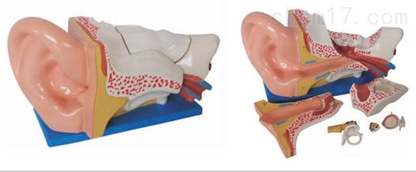 新型大耳解剖模型  人体各大器官