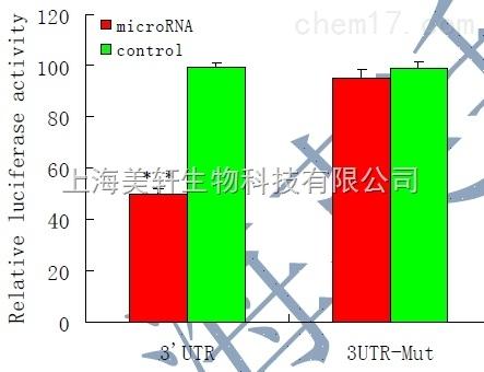双荧光素酶验证实验/双荧光素酶报告基因检测