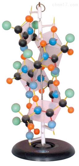蛋白质演示模型 生物模型