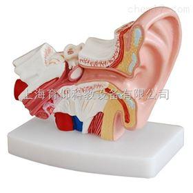 小型耳解剖放大模型(1.5倍大)|脉管感觉系统模型