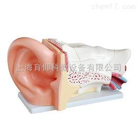 新型大耳解剖放大模型(5倍)|脉管感觉系统模型