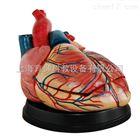 新型心脏解剖放大模型|脉管感觉系统模型