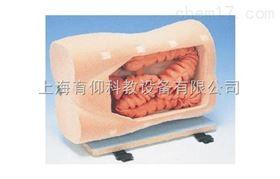 结肠镜检查训练模型|临床诊断实训模型