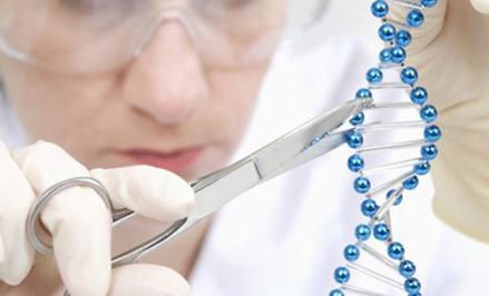 超越现代生物技术 谁将手握第四代基因编辑剪刀