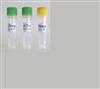 小鼠B淋巴细胞杂交瘤细胞;FIB 2-11