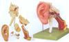 GD/A17202耳结构放大模型