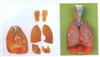 GD/A13012喉、心、肺模型