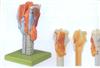 GD/A13004喉模型