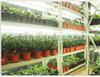 PYJ-LED普朗特植物光照培養架廠家批發上門安裝