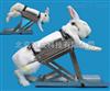 ZC/TGD-2多功能兔固定架、兔子固定实验架