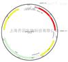 pRSETB-mKO2载体,大肠系列质粒